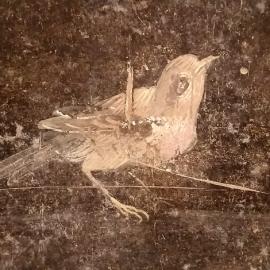 014_romanbird